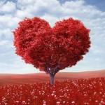 liefdesboom